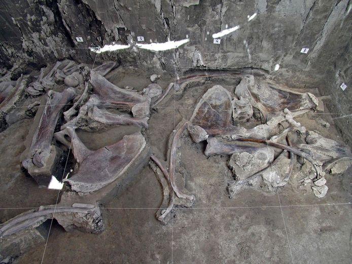 Archeologen vermoeden dat er nog meer mammoetvallen in de regio terug te vinden zijn.