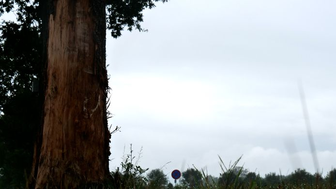 De boom waartegen de auto abrupt tot stilstand kwam laat de sporen zien van het drama dat zich vannacht afspeelde aan de Wijheseweg in Broekland.
