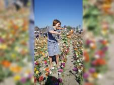 Delft Bloeit moet uitkijken naar nieuw 'bloemenveld'