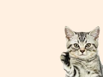 Man (28) die katje van zijn vriendin voor webcam wurgde, mag nooit meer dieren houden