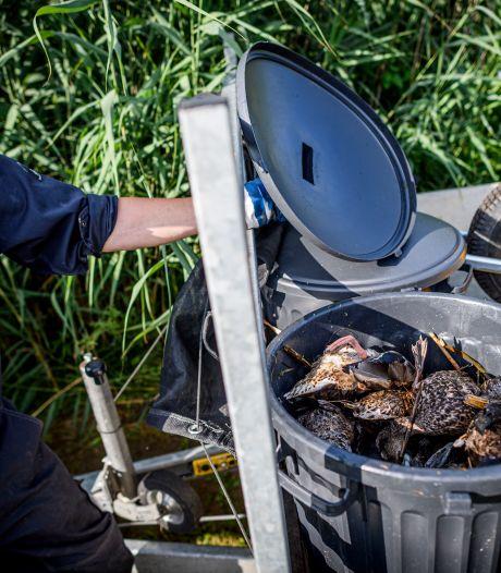 Trieste conclusie na een week botulisme in Kristalbad: 300 vogels legden het loodje