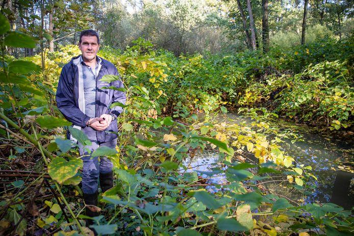 Martien van Beljouw van waterschap De Dommel aan de oever van het riviertje de Reusel, die vol met duizendknoop staat.