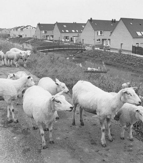 Stadspolders bestaat 40 jaar maar had het nooit makkelijk: 'Het Rotterdams was jaren de voertaal'