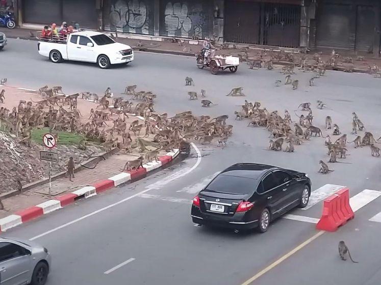 Rivaliserende apenbendes zorgen voor verkeerschaos in Thailand