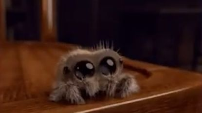 """""""Er zit een dikke spin met enorme poten in mijn woonkamer"""": brandweer laat u meegenieten van 'dringende oproep'"""