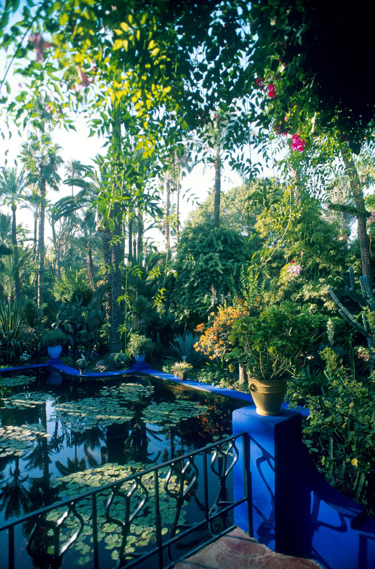 De Jardin Majorelle in Marrakech van modeontwerper Yves Saint Laurent, die toegankelijk is voor het publiek. In de tuin groeien cactussen, palmen en bamboestokken, en er is fraaie architectuur in de kleuren paarsblauw en donkergeel. In de volksmond heet het 'de tuin van Yves'.  Beeld Getty
