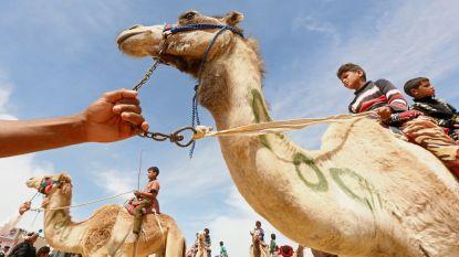 Dierenmisbruik: keerzijde van heropleving Egyptische toeristensector