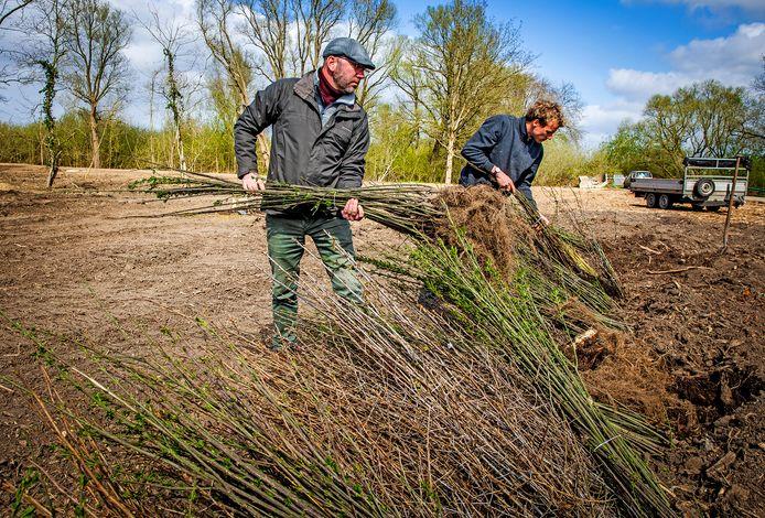 Ter compensatie van de bomenkap worden er in de Buitenzomerlanden in Heinenoord weer nieuwe bomen geplant.