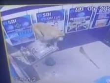 Un distributeur automatique d'argent vandalisé par un singe