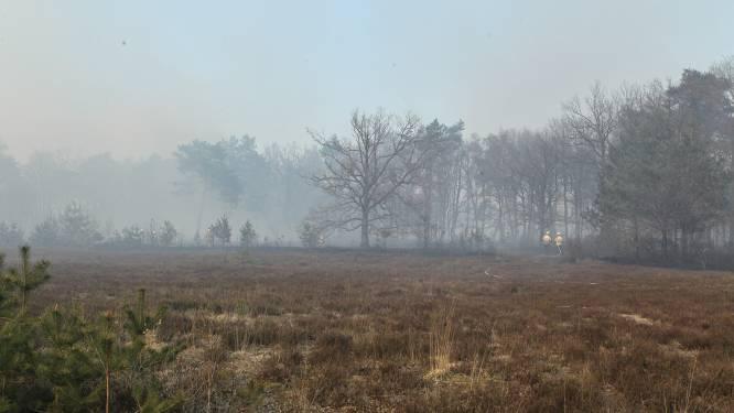 """Brand Groot Schietveld veroorzaakt grote ecologische schade: """"Nesten zeldzame vogels sowieso verloren"""""""