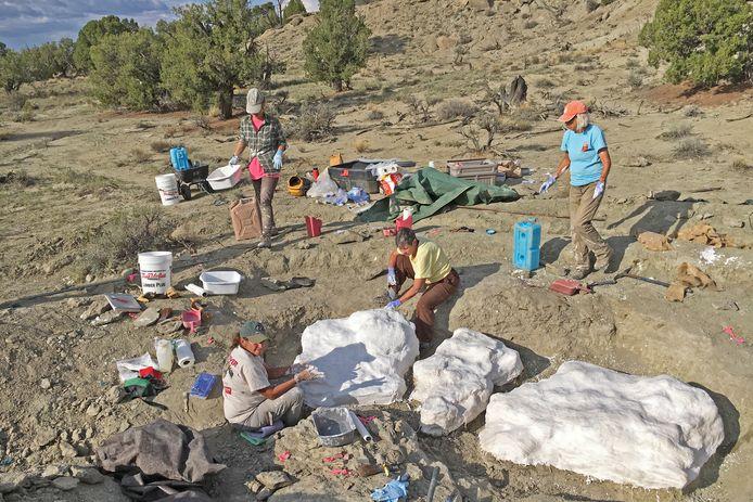 Onderzoekers aan het werk in de Rainbows and Unicorns Quarry in Grand Staircase-Escalante National Monument in de staat Utah.