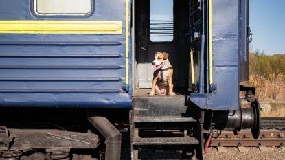 Ontsnapte hond neemt op eigen houtje de trein naar Utrecht Centraal