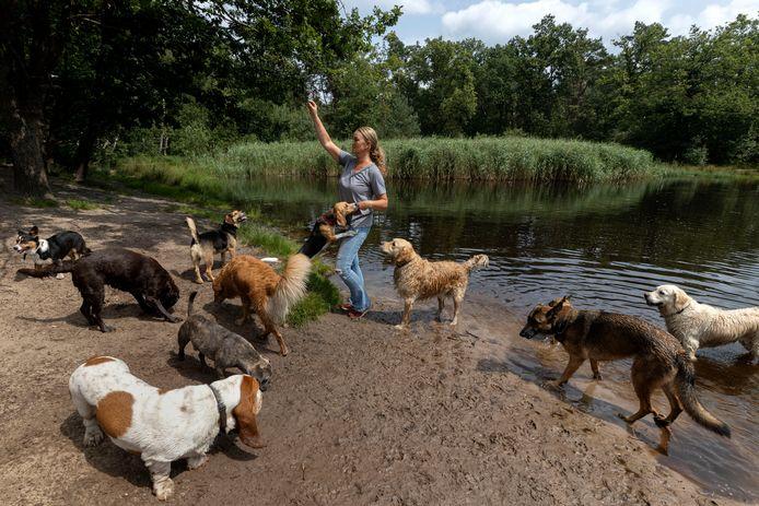 Heidi van Sambeeck neemt honden mee op hondenvakantie, de baasjes gaan niet mee en blijven thuis.