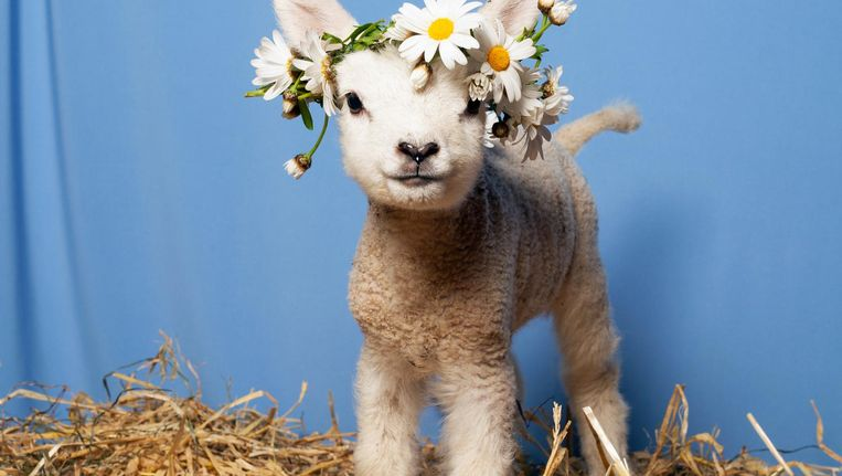 Dit zijn de beste ideeën voor deze lente | Het Parool