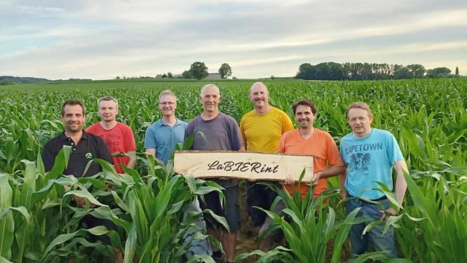 Ontdek 'LaBIERint' in Reningelst: een maïsdoolhof in de vorm van een bierglas