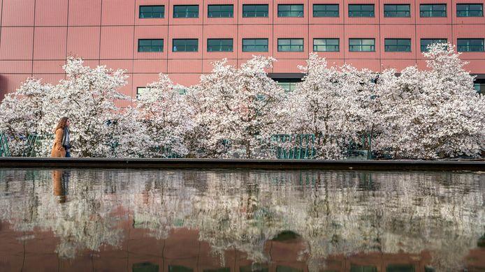 De Interpolistuin staat weer prachtig in bloei.