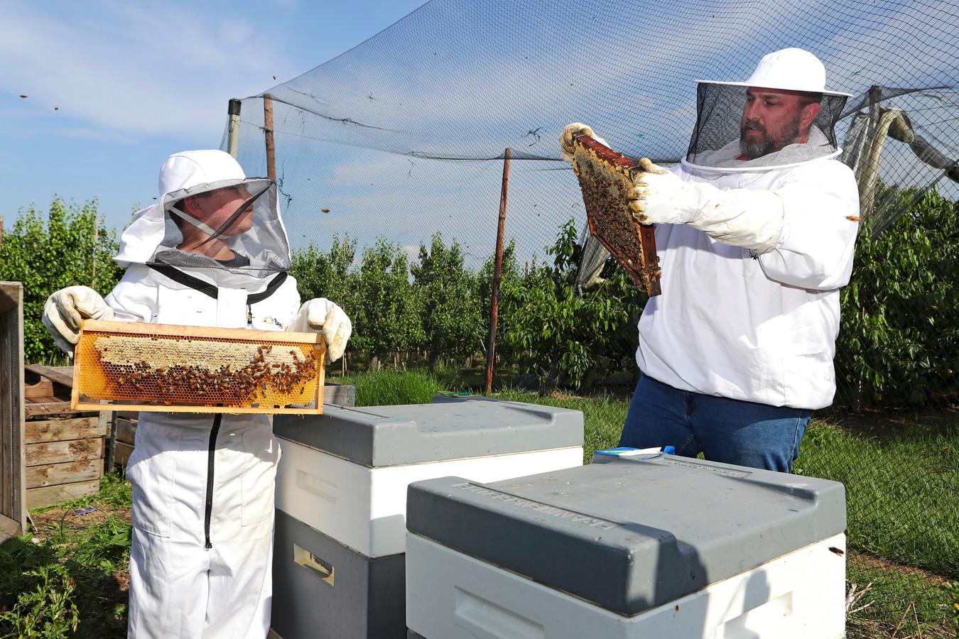 Mattheo (9) en zijn vader Theo van Lent met hun bijen.