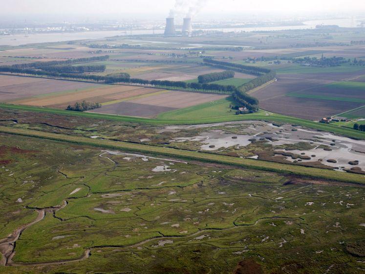 Provincie 'hartstikke bezorgd' over PFAS-verontreiniging in Westerschelde en eist snel duidelijkheid