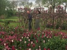 Ruim 15.000 tulpenbollen gepoot voor 15-jarige 'Tuinen van Demen'