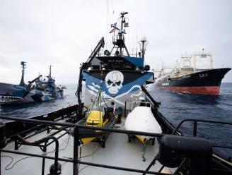 """""""Sea Shepherd redt 750 walvissen van de slachtbank"""""""