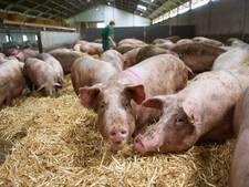 Samenvoegen varkensbedrijven Coppens Boekel onuitvoerbaar