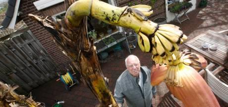 Nostalgie en liefde geven een bijzondere bananenoogst in Andelst: 'En natuurlijk praat ik met de boom!'