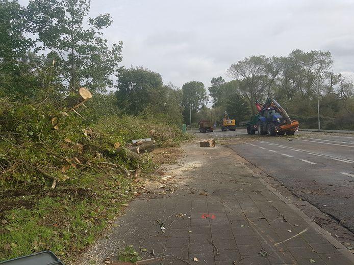 In een deel van de Jaak van Buggenhoutlaan zijn de bomen al weggehaald.