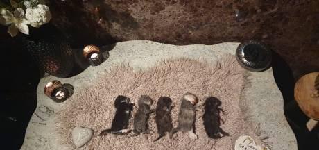 Woede en verdriet om doodgeslagen kittens in Hengelo: 'Vermoord en als afval gedumpt'