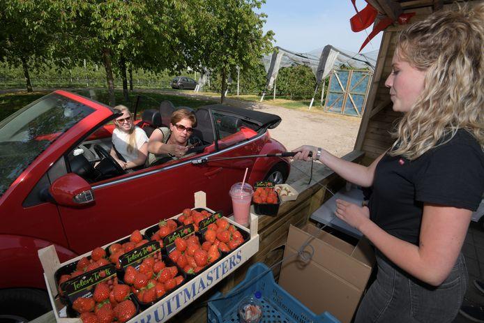 De aardbeien drive-in in Geldermalsen