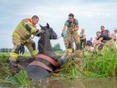 Paard neemt koele duik in sloot, brandweer is twee uur bezig dier weer op het droge te krijgen