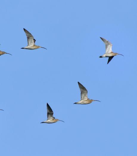 Vogelaar stelt pluimveehouders rond natte Baalder Uiterwaard gerust: 'Niet meer kans op vogelgriep'