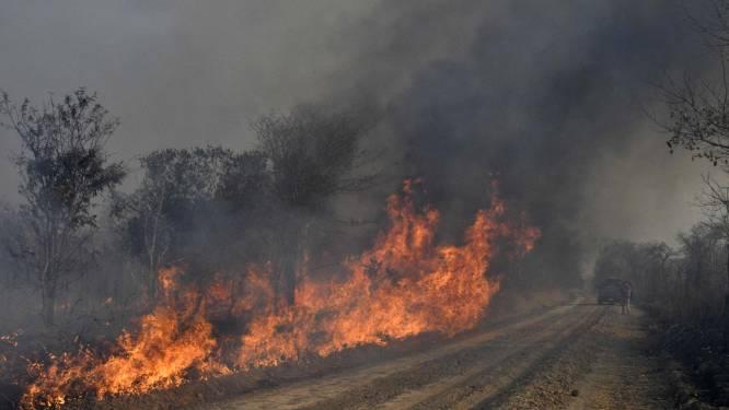 Des incendies criminels dévastent des réserves écologiques en Bolivie