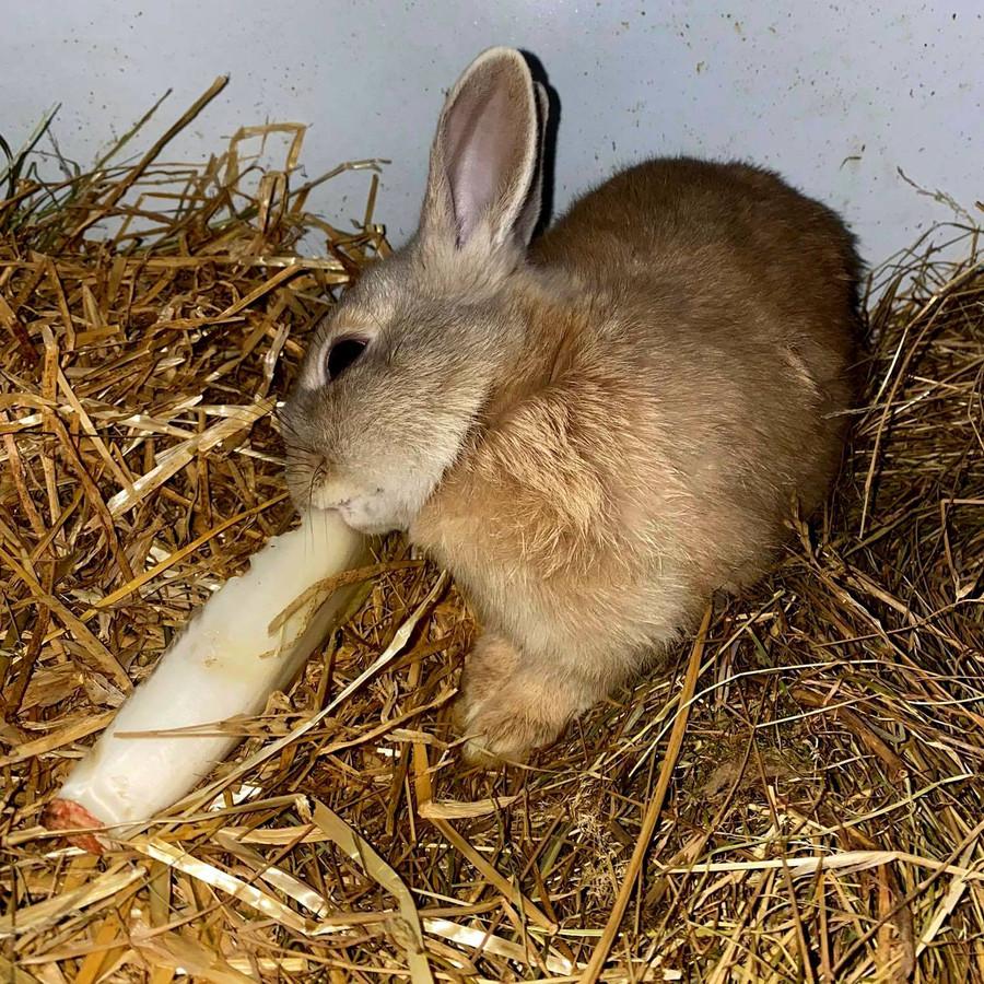 Een van de konijntjes.