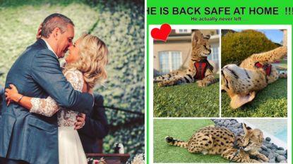 SHOWBITS. Gert Verhulst viert zijn 1ste huwelijksverjaardag en 'Temptation'-Megan vindt haar exotische kat terug