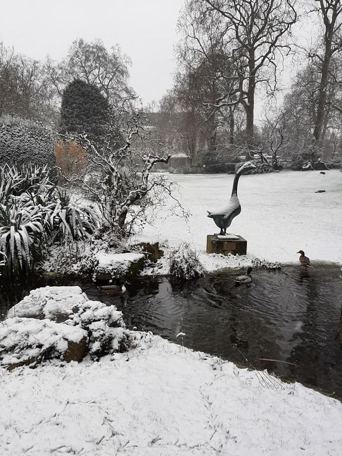 De Zoo werd bedekt met een dun laagje sneeuw.