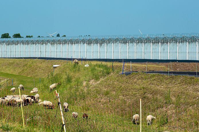 Bij Dinteloord verrees tien jaar geleden een groot kassencomplex. Wat de Regio West-Brabant betreft, mag de agrofood-sector worden uitgebouwd 'met de focus op grote teelten' en kan daar een kwartiermaker voor aangesteld worden.