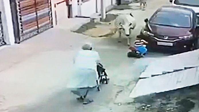 Omstanders redden kleuter op driewieler van koe