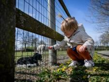 De ezels en de pony zijn terug op kinderboerderij en de deuren weer open: 'Het is altijd leuk de dieren te zien'