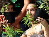 Praten over het telen van cannabis