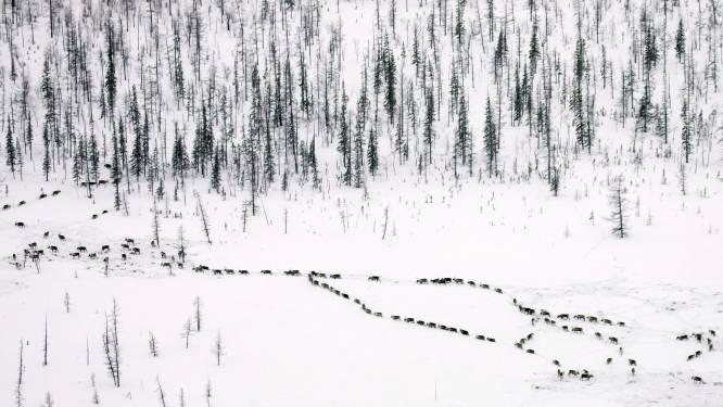 Italiaanse reisblogger tilt zelf-isolatie naar een hoger niveau en trekt naar Noordpoolgebied
