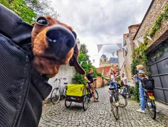 Fietsgids leert hondenbaasjes Dijlestad kennen met 'Dogs on Wheels'