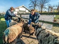 Kinderboerderij Tanthof vreest voor voortbestaan: 'Dit kan het einde van een prachtig gebied betekenen'