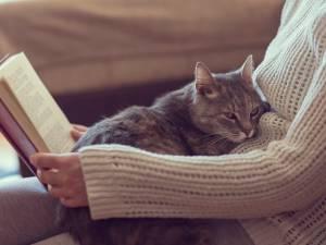Des photos de chats pour dénoncer les abus d'enfants: l'appel de Child Focus sur les réseaux sociaux