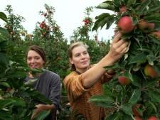 Burgemeestersdochter in de boomgaard: 'Soms zijn mijn handen te klein voor een tros appels'