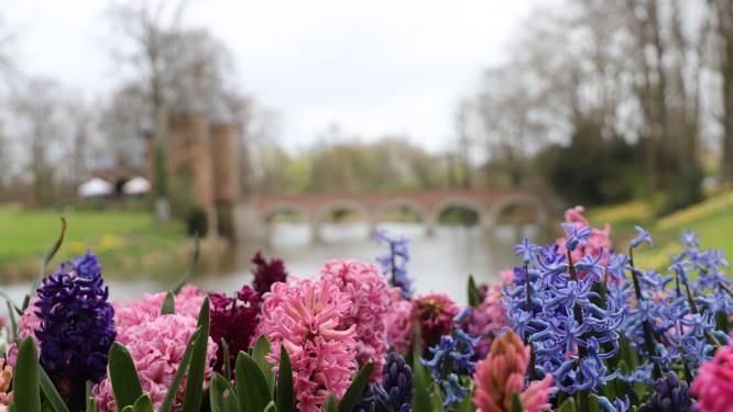IN BEELD. Een bezoekje aan de prachtige bloemenweides van Floralia Brussels
