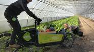 Fietskoeriers brengen groenten tot op de stoep
