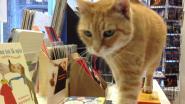 Salvator neemt afscheid van Ozlo, de meest belezen kat van Vlaanderen