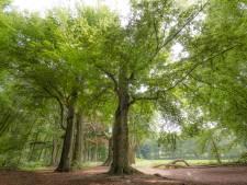 Boom van het Jaar staat weer niet in Utrecht, familiebeuk in Rhenen legt het af tegen 'instaboom'
