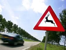 Automobilisten gewaarschuwd: pas op voor hitsige reeën