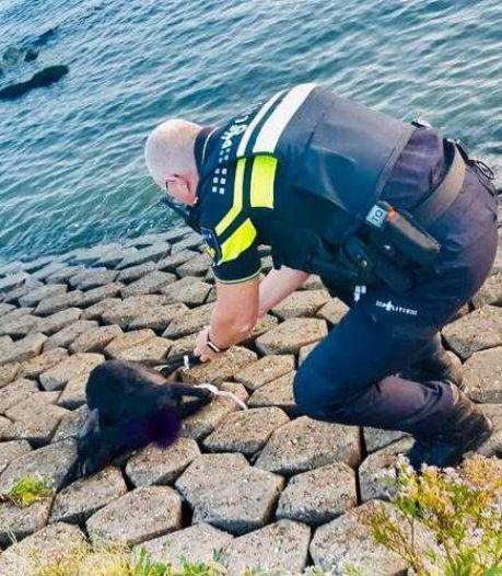 Zielig: dood geitje met vastgebonden pootjes aangetroffen in Maassluis